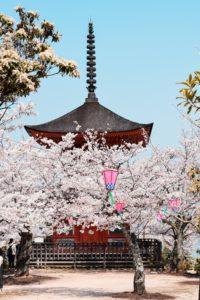 Sakura – Tokyo
